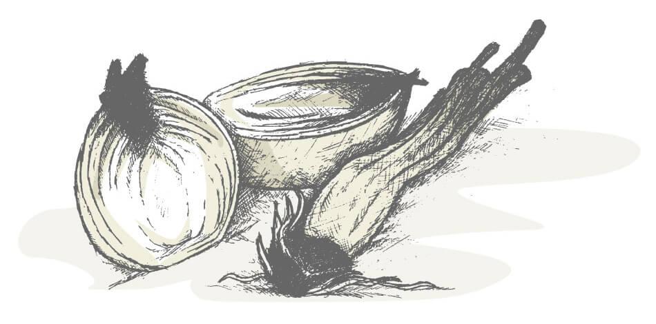 Non piangere gli scarti della cipolla: piantali!